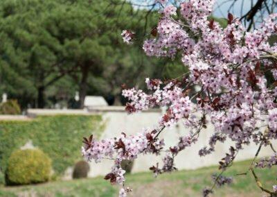 Cirerers