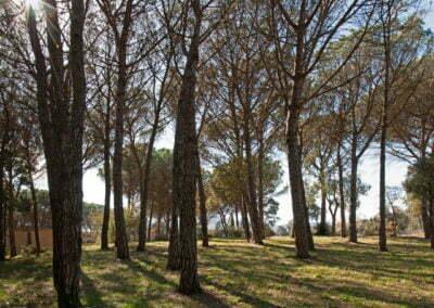 Panorama del bosc
