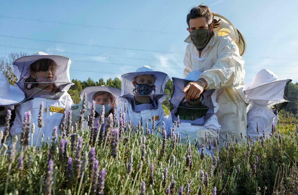 Roques Blanques acull el primer apiari didàctic en un cementiri per fomentar la protecció de les abelles